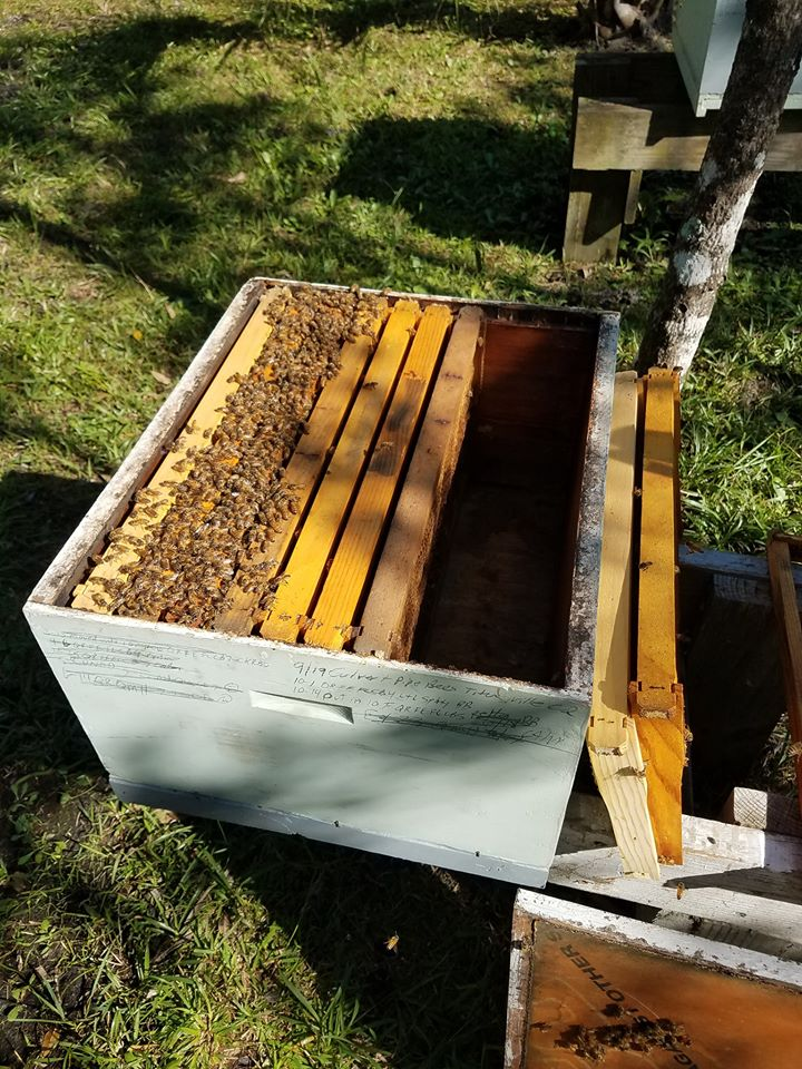 If your bees only cover 3 or 4 frames inside your colony...it's time to reduce the space.  Bees need lots of space when there are lots of bees, so it makes sense that when the numbers are down in the wintertime we should reduce the space that the smaller amount of bees have to defend.  It's like your Grandparents still trying to maintain that 12 bedroom house when all the kids are gone!