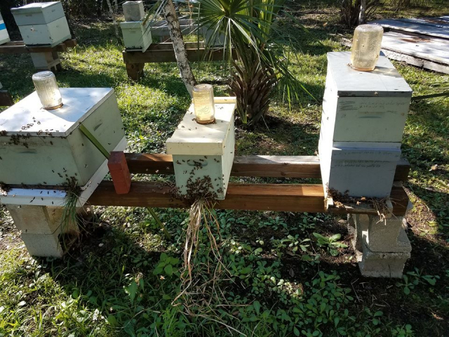The bees are now reduced (after).  Less space to defend lets the colony rest while waiting out the cold weather and lack of nectar/pollen during the dearth times.