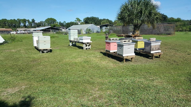 At our club Apiary, Brevard Backyard Beekeepers Inc. members have an opportunity to get hands-on, minds-on training from expert Club members.