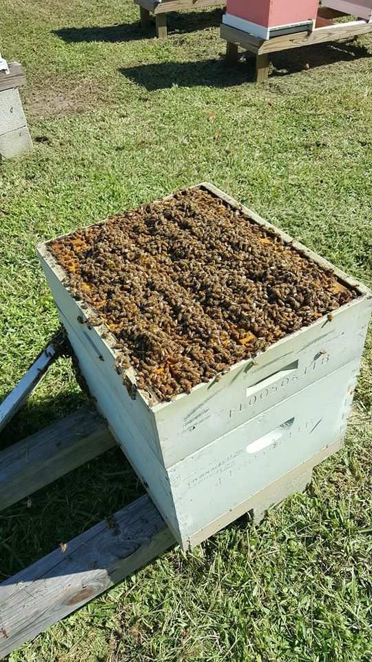 Club bee hive interior view.  Did you know this box could contain over 40,000 bees?