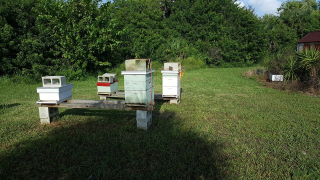 It's up to the beekeeper to make sure their hives are ready for Hurricanes in Florida.  Protecting hives is very important to Bee Keepers.  Here is a proper technique for strapping down hives in anticipation of strong winds from a Hurricane.
