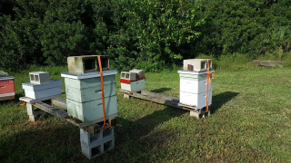 """Another view of the Brevard Backyard Beekeepers Inc """"hurricane ready"""" apiary.  Feel free to emulate this strapped down look next time we have a hurricane here in Central Florida."""