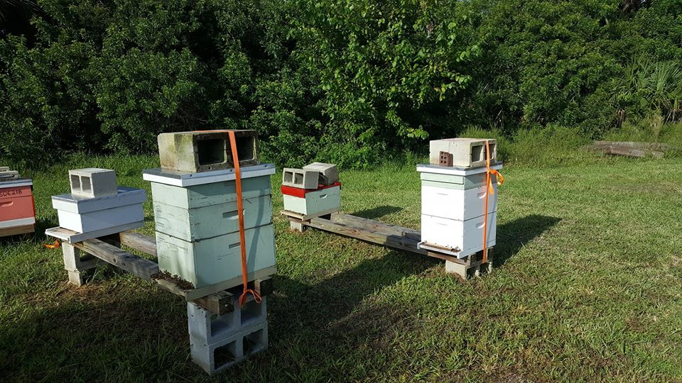 "Another view of the Brevard Backyard Beekeepers Inc ""hurricane ready"" apiary.  Feel free to emulate this strapped down look next time we have a hurricane here in Central Florida."