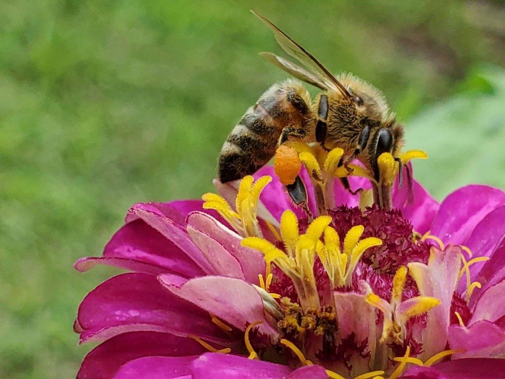 Brevard Backyard Beekeepers loves honeybees and wants to preserve them.
